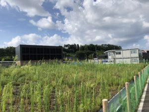 2018年7月 羽沢横浜国大駅開発状況5